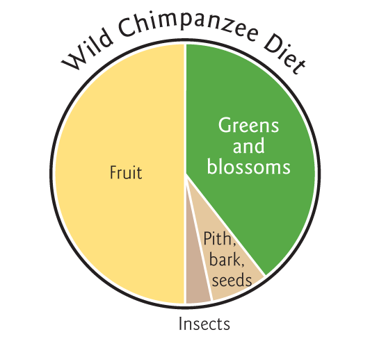 graphs-wild-chimpanzee