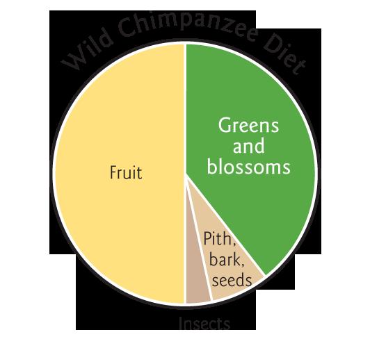 graphs-wild-chimpanzee