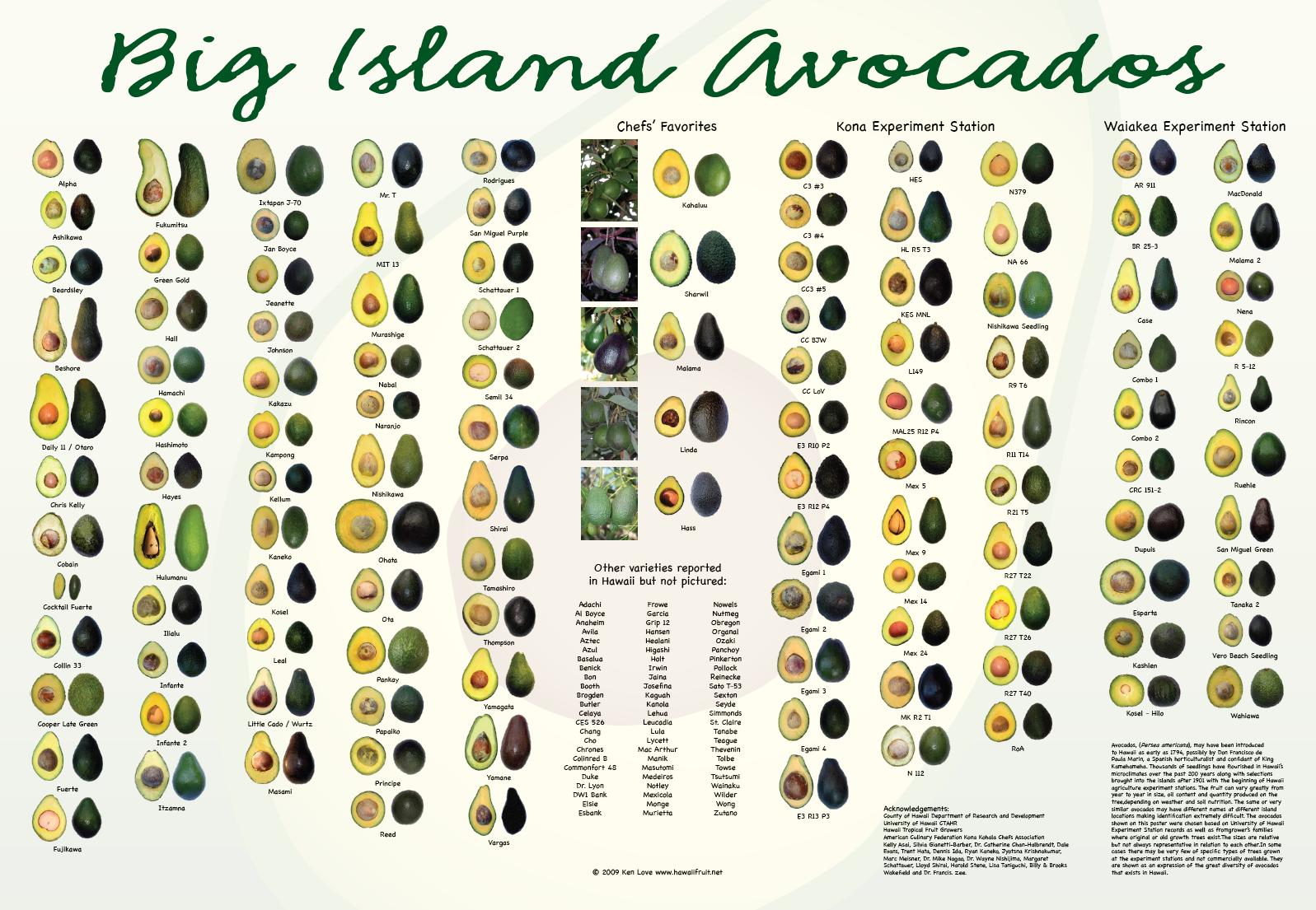 Avocado varieties (1)