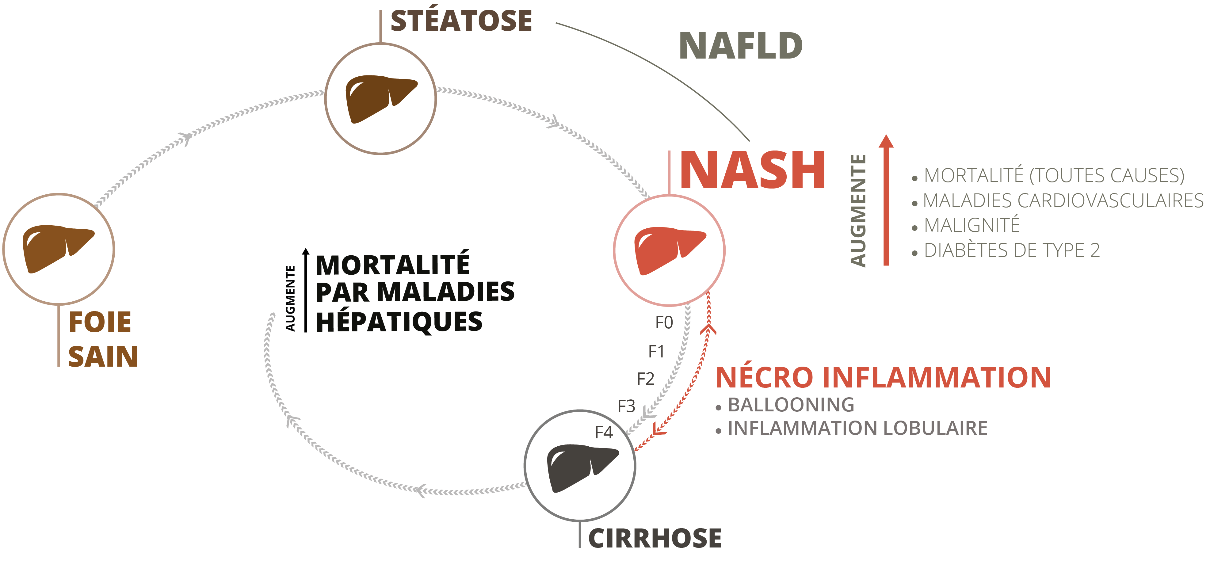 NASH naturopathie